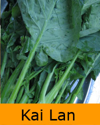Kai Lan / Chinese Broccoli